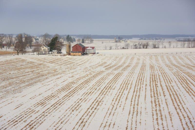 Melkveehouderij in de winter stock foto's