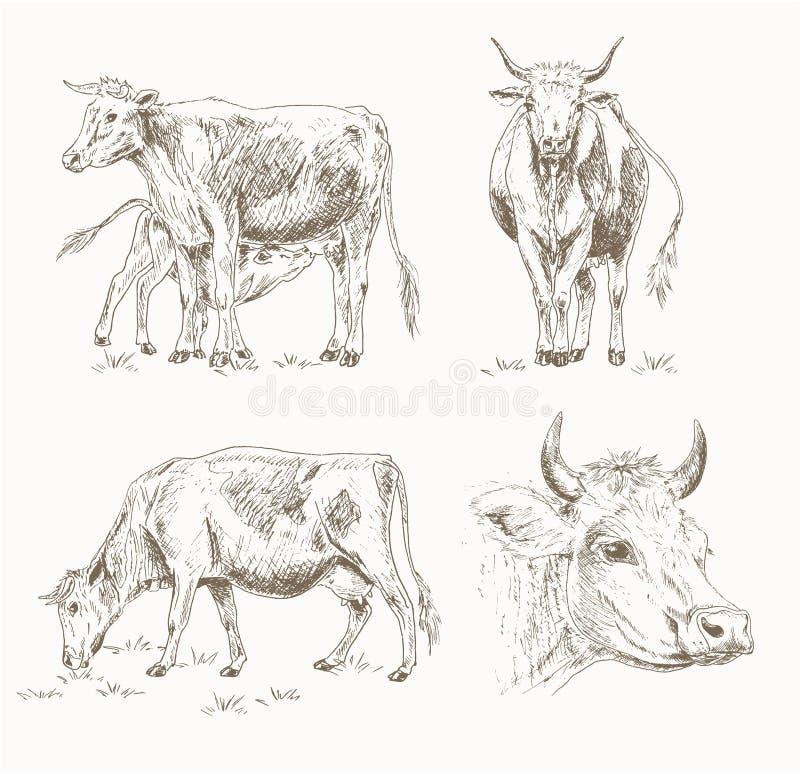 Melkveeschets royalty-vrije illustratie