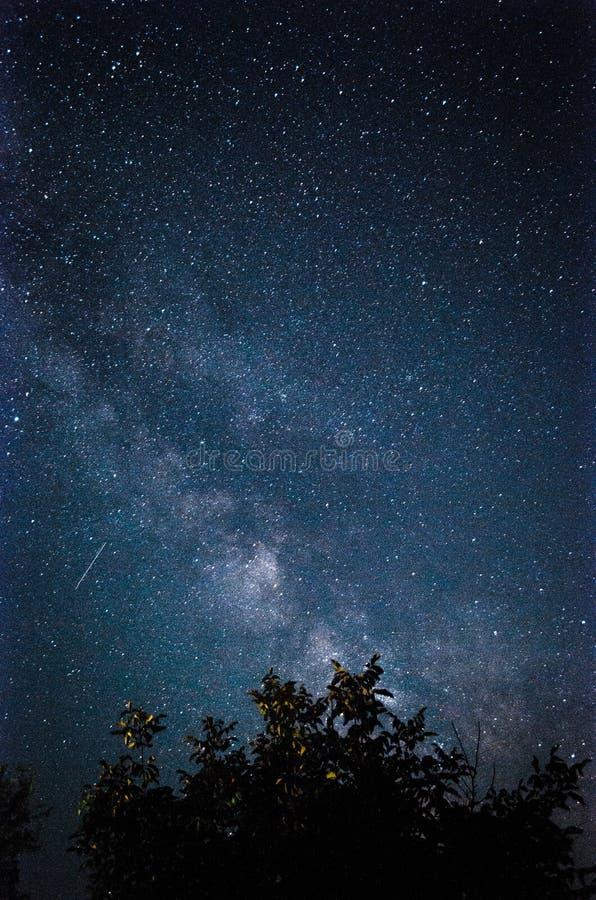 Melkweg achter een boom stock foto's