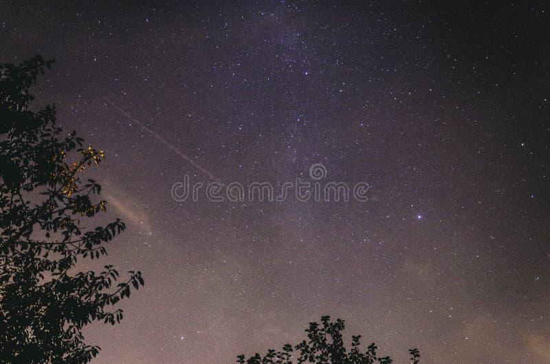Melkweg boven Bomen stock afbeelding