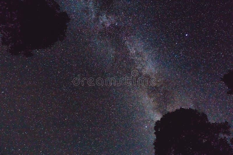 Melkweg en sommige bomen in de bergen Het landschap van de nacht stock fotografie