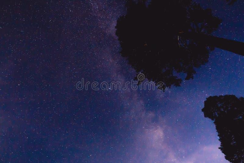 Melkweg, sterren en sommige bomen in de bergen Het landschap van de nacht royalty-vrije stock afbeeldingen
