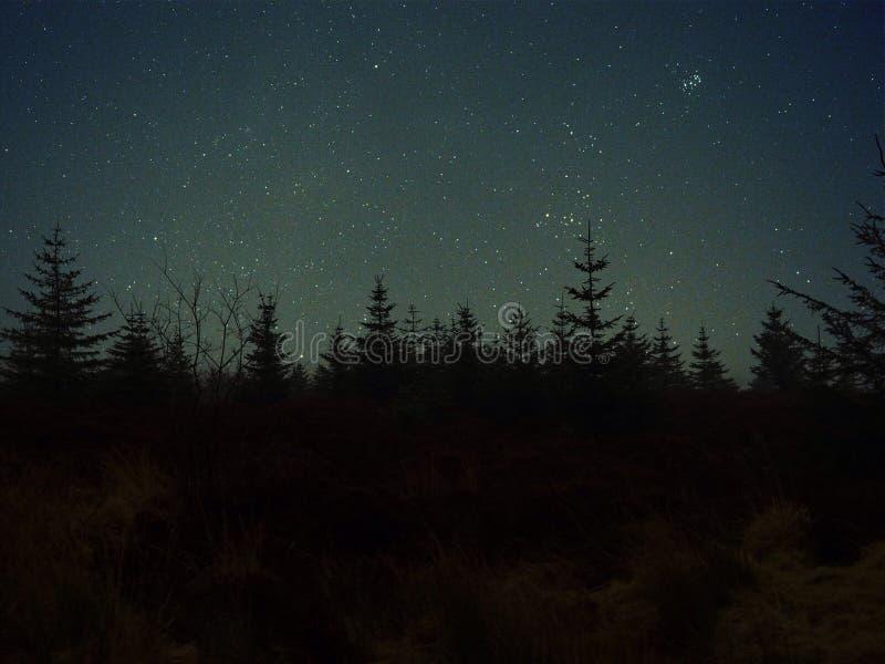 Melkwegen boven de bomen royalty-vrije stock fotografie