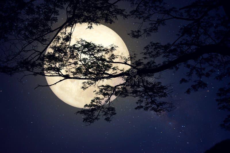 Melkwegster in nachthemel, volle maan en oude boom royalty-vrije stock foto's