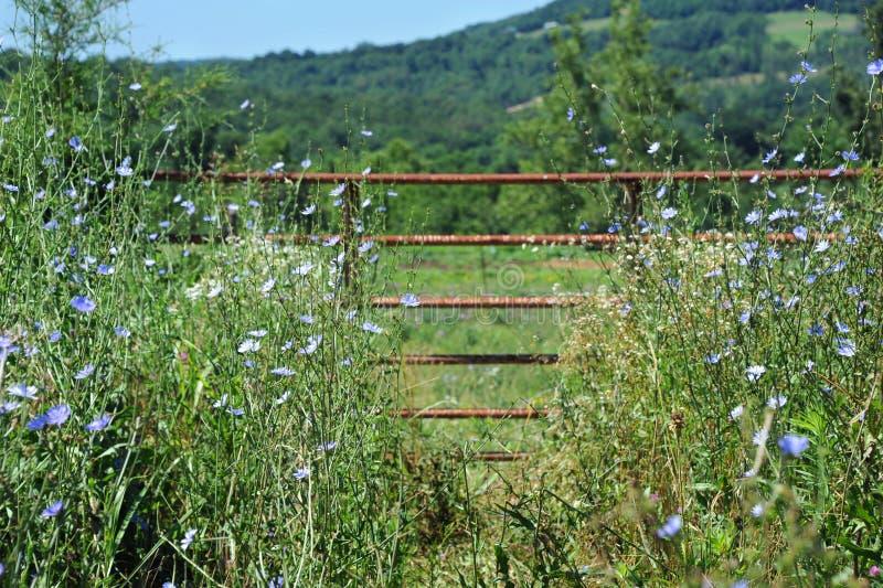 Mellan högväxt gräs arkivbild