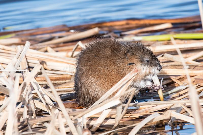 Mellanmåltid på sjön royaltyfria foton