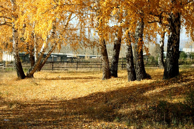 Mellow autumn