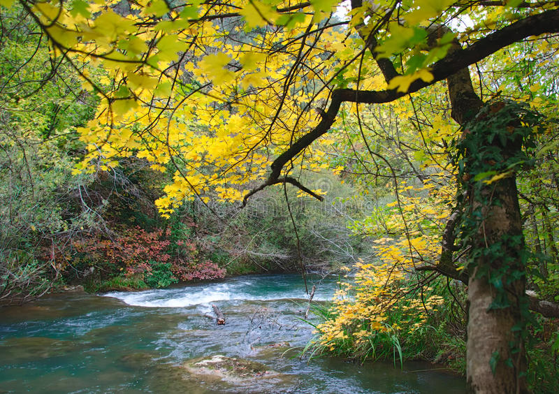 Mellow autumn on river bank. With blue water stock image