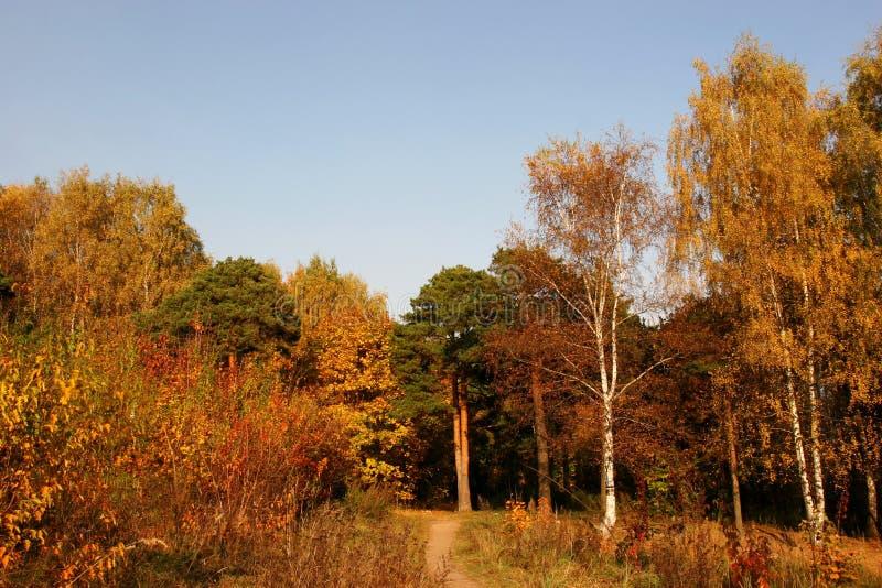 Download Mellow herfst stock afbeelding. Afbeelding bestaande uit daling - 286721
