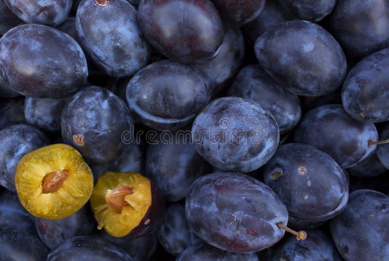 Mellow plums royalty free stock photos