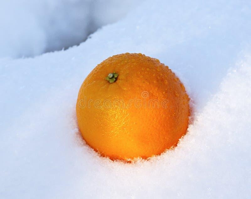 Mellow sinaasappel in witte verse sneeuw royalty-vrije stock foto