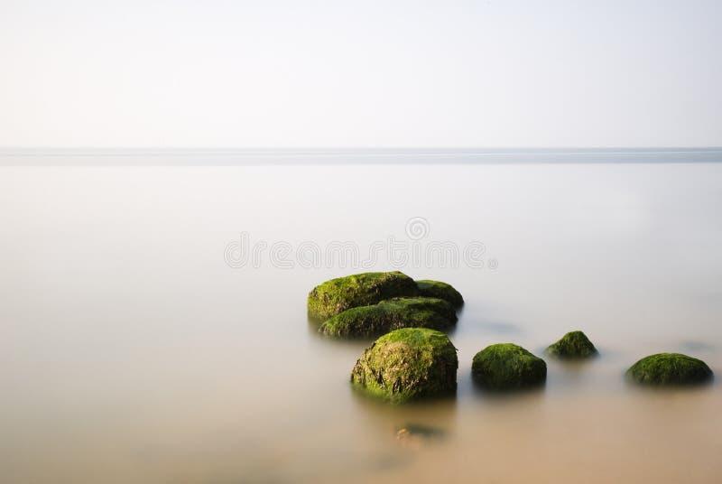 Melma verde fotografia stock libera da diritti