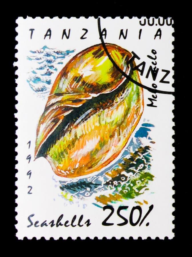 Melo van Volutemelo, Overzeese slakken en mosselen serie, circa 1992 royalty-vrije stock foto