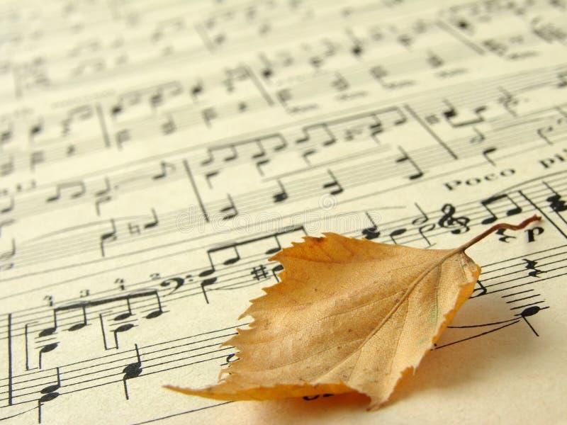 Melodia d'autunno 1 fotografia stock libera da diritti