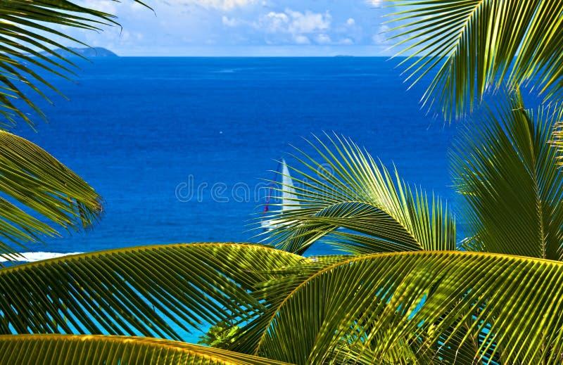 melodia tropikalna fotografia royalty free