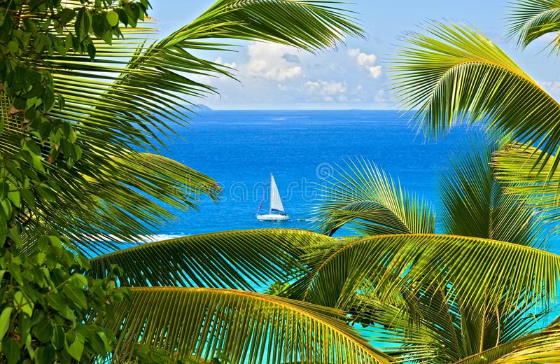 melodia tropikalna obraz stock