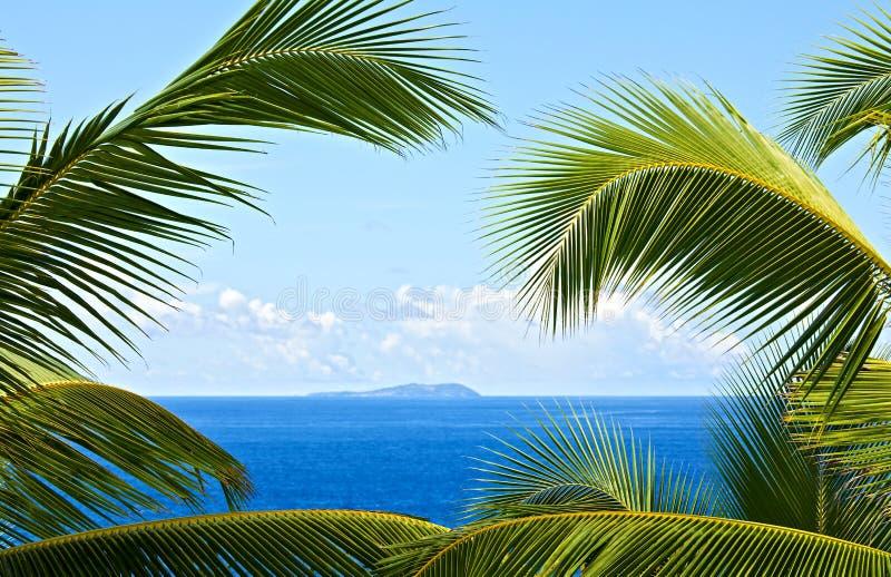 melodia tropikalna zdjęcie royalty free