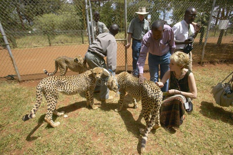 Melody Taft de la société humanitaire des USA visite le guépard chez l'installation animale de Nairobi, Kenya, Afrique au service photo libre de droits