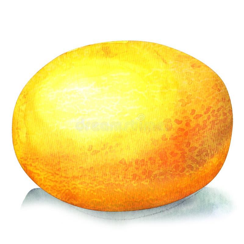 Meloen op witte achtergrond stock illustratie