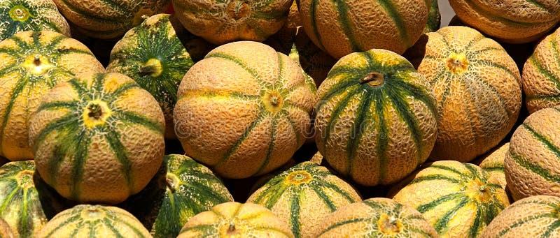 Meloenen 7795 stock afbeeldingen