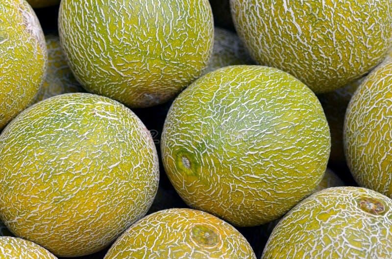 Meloenen op vertoning in voedselmarkt stock afbeeldingen