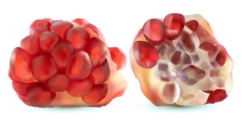 melograno realistico di vettore 3d, allegagione tropicale, isolata su fondo bianco Melograno maturo rassodato Rubino rosso illustrazione di stock