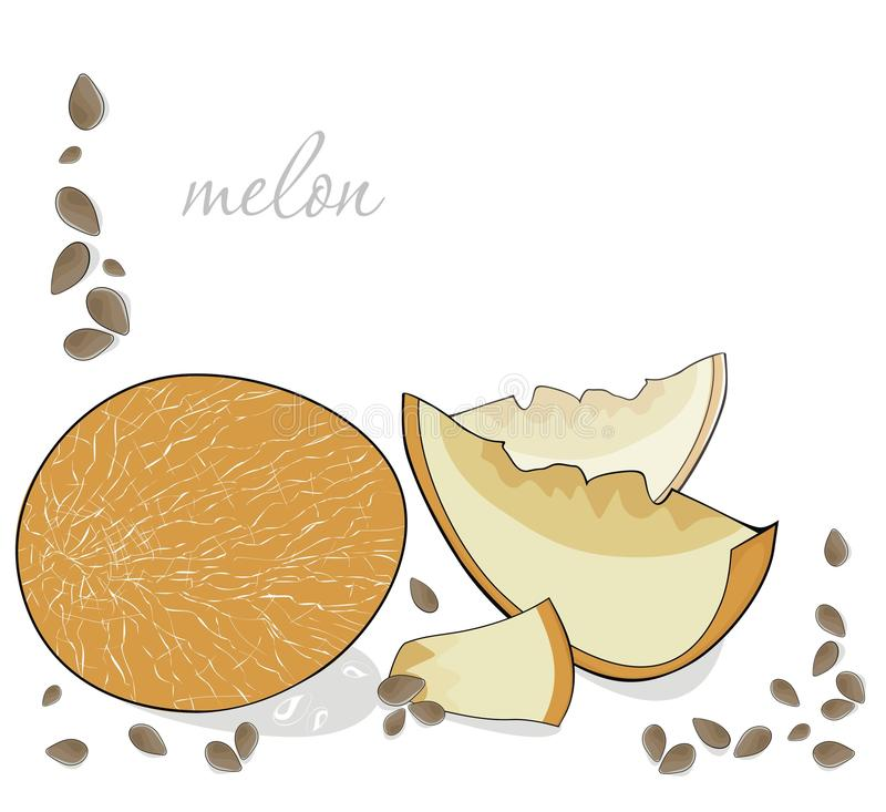 Download Melon stock vector. Image of card, drawing, plant, food - 25941067