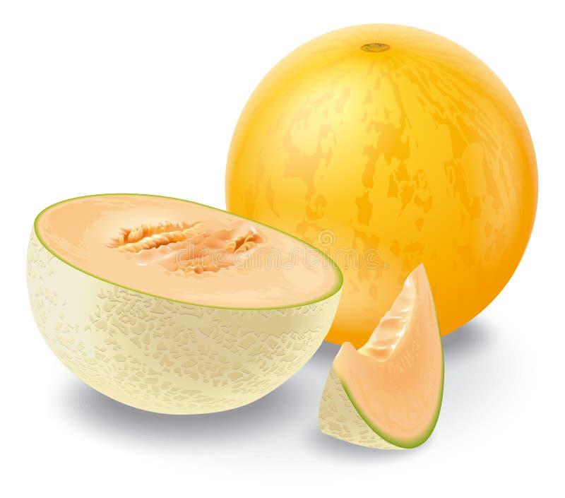 Melon illustration stock