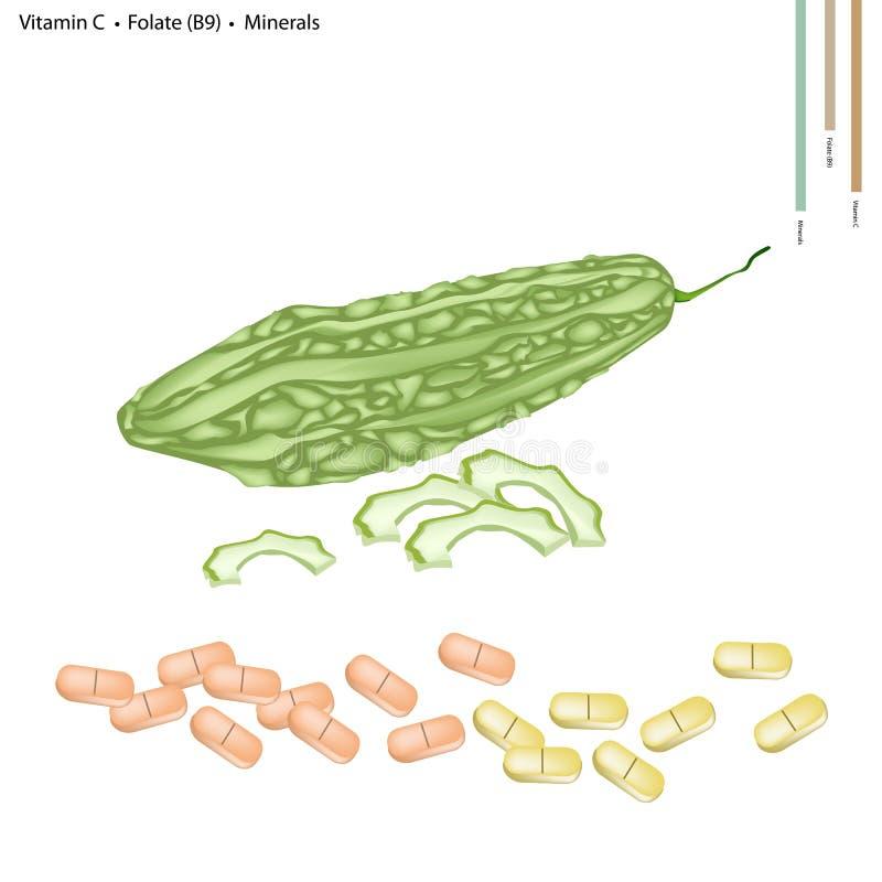 Melon amer avec la vitamine C, le B9 et les minerais illustration libre de droits