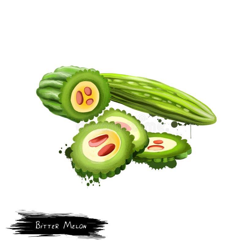 Melon amer d'isolement sur le fond blanc illustration libre de droits