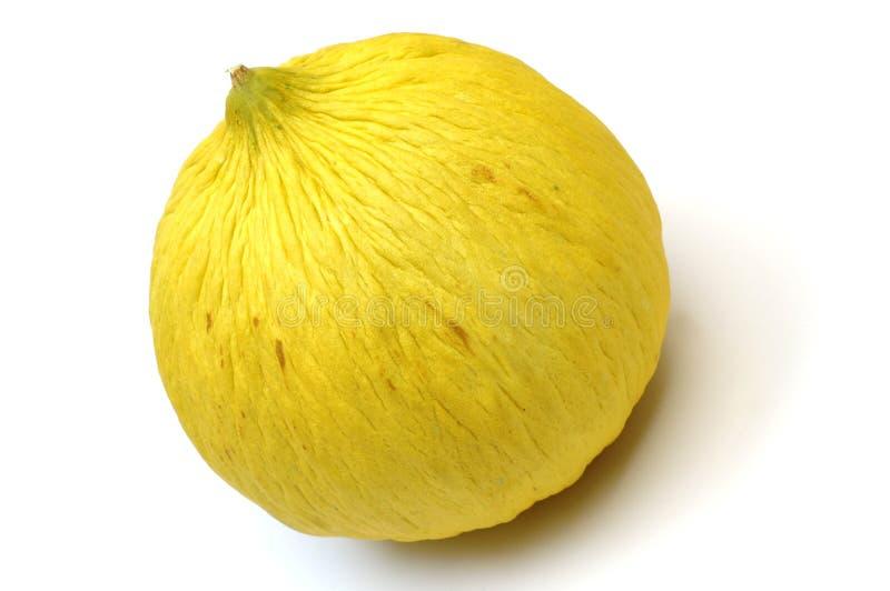 melon casaba fotografia stock