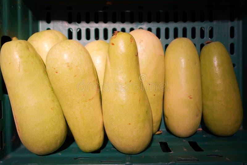Melon d'hiver accrochant dans le jardin E images libres de droits