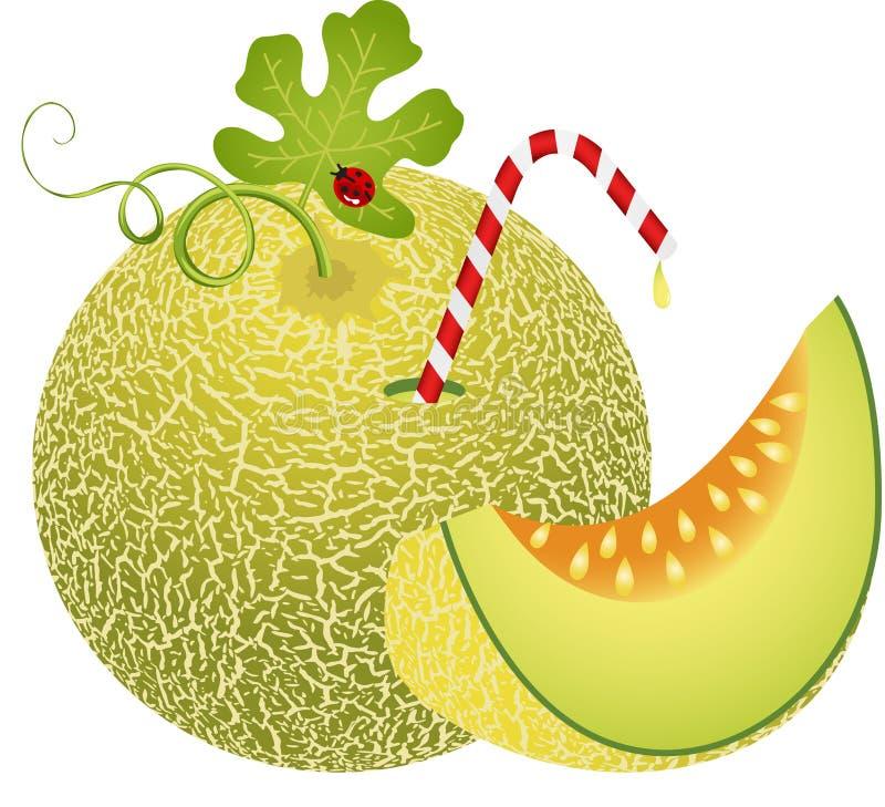 Melon de cantaloup avec la paille illustration de vecteur