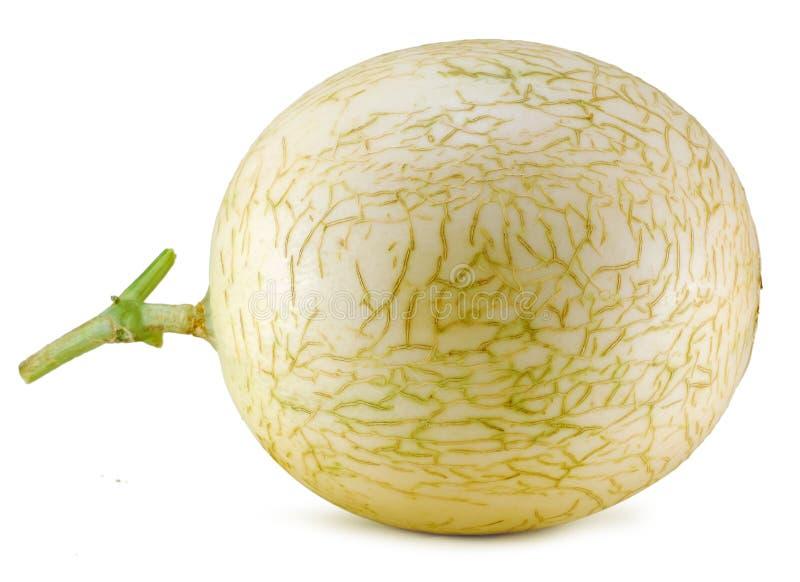 Melon de cantaloup d'isolement sur le fond blanc image libre de droits