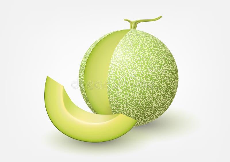 Melon de cantaloup, illustration de vecteur de fruit illustration libre de droits