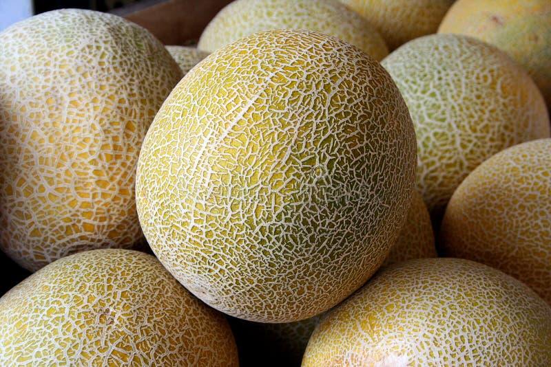 Melon jaune images libres de droits