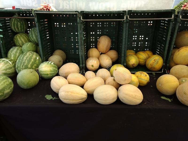 Melon Madness royalty free stock photography