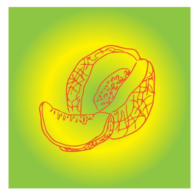 Melon miodowy. Całe, świeże, dojrzałe owoce słodkie z kawałkiem soku w plasterkach. Melon realistyczne owoce, wyizolowane na ilustracji