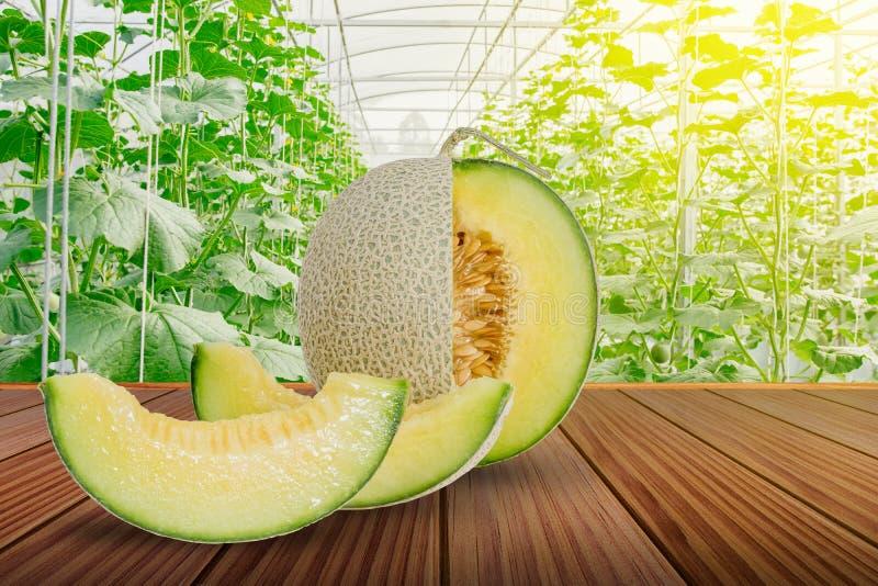 Melon ou cantaloup vert coupé en tranches sur la terrasse en bois brune photo libre de droits