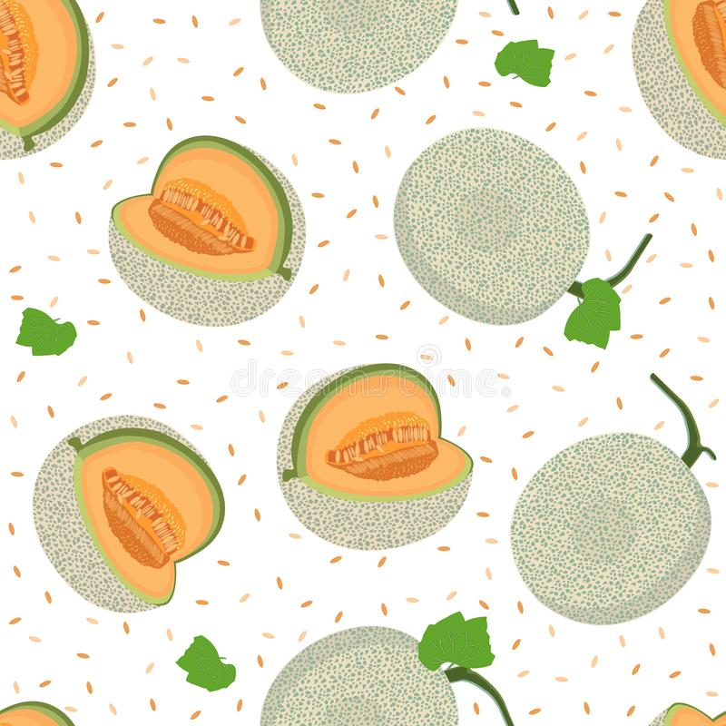 Melon whole seamless pattern on white background, Fresh cantaloupe melon pattern background, Fruit vector vector illustration