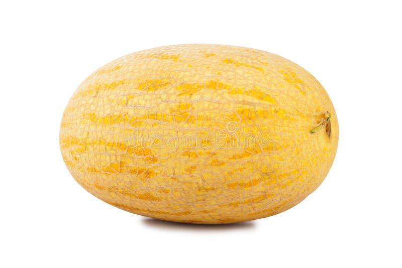 Melon. Whole melon on white background stock image