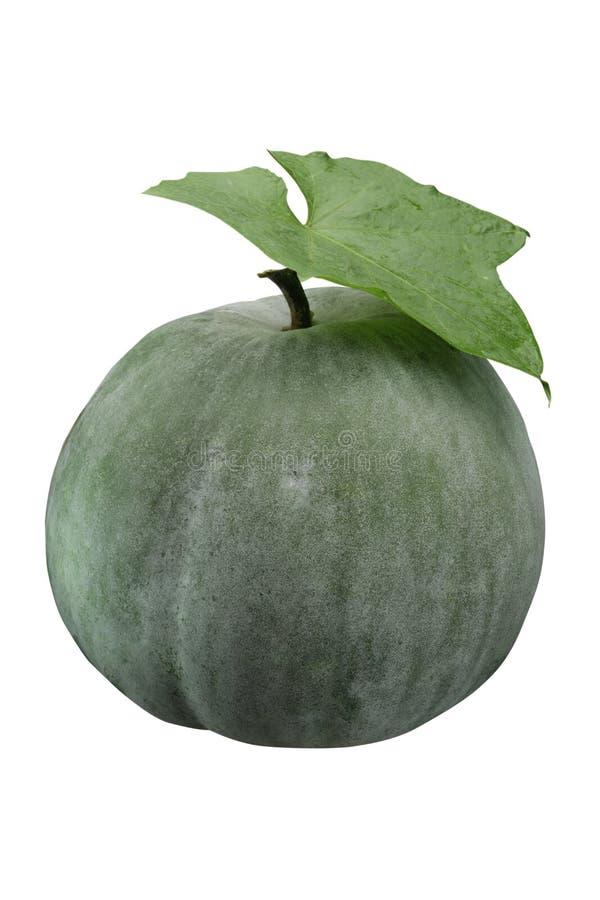 Melone di inverno immagini stock