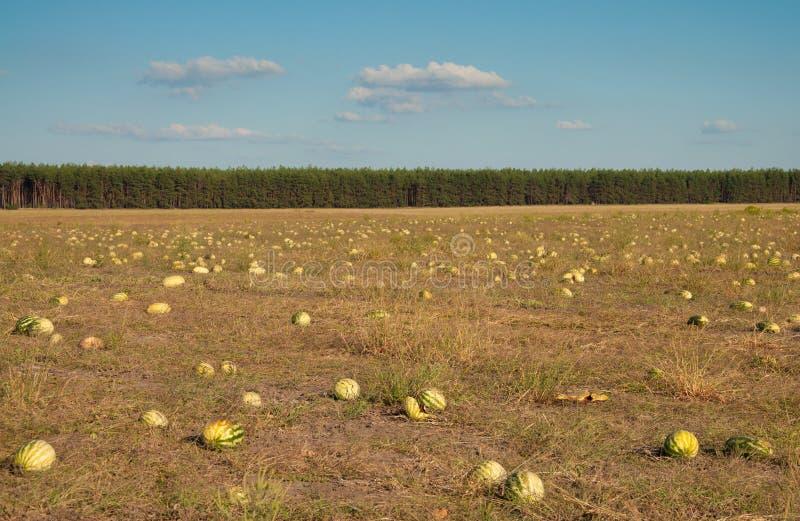 Melonenfeld lizenzfreie stockfotos
