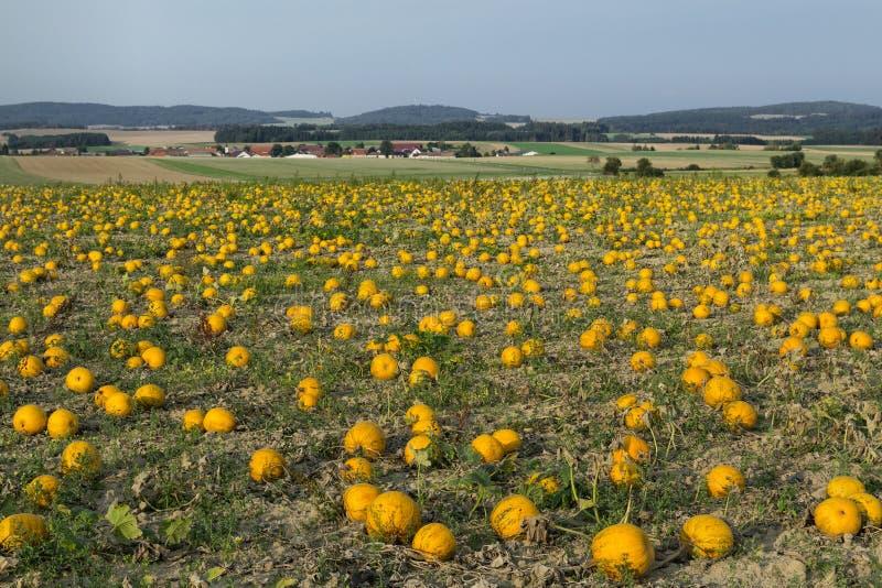 Melonenfeld in der Landschaft stockfotos