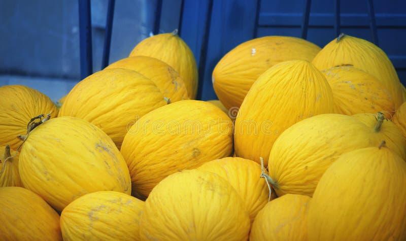 Melones en recogida fotos de archivo libres de regalías