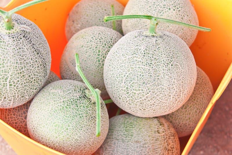 Melones japoneses en una cesta plástica fotos de archivo libres de regalías