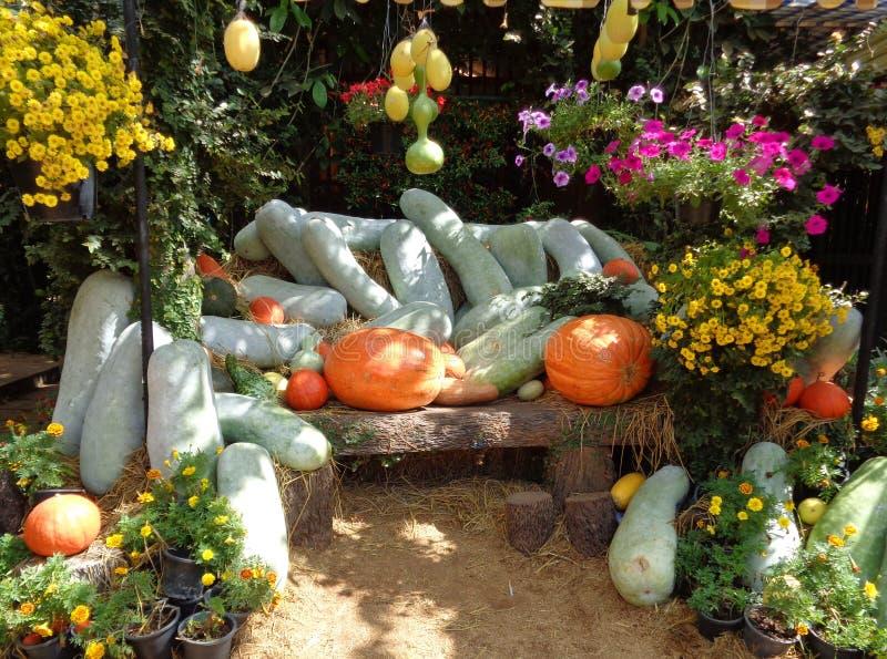 Melones y calabazas de invierno entre las flores florecientes multicoloras fotos de archivo libres de regalías