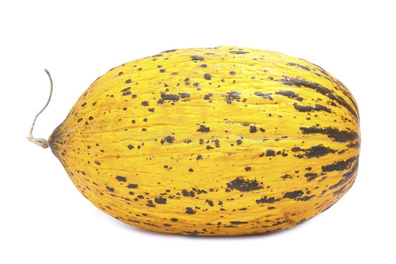 Meloni isolati immagine stock