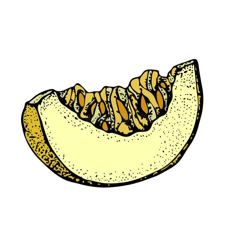 Melonowa wektorowa ilustracja Ręka rysująca pokrajać kawałek odizolowywającego na białym tle melon Lata doodle stylu Owocowa ilus royalty ilustracja