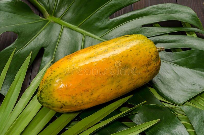 Melonowiec na palmowych li?ciach zdjęcie royalty free